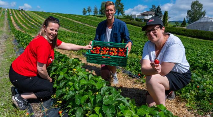 NAV-ansatte testet jordbærplukking