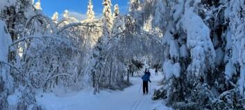 Kommunen starter hogst langs skiløypene